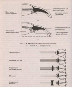 Механизм аккомодации